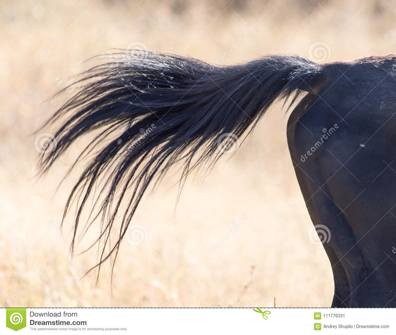 Tail of a horse on nature