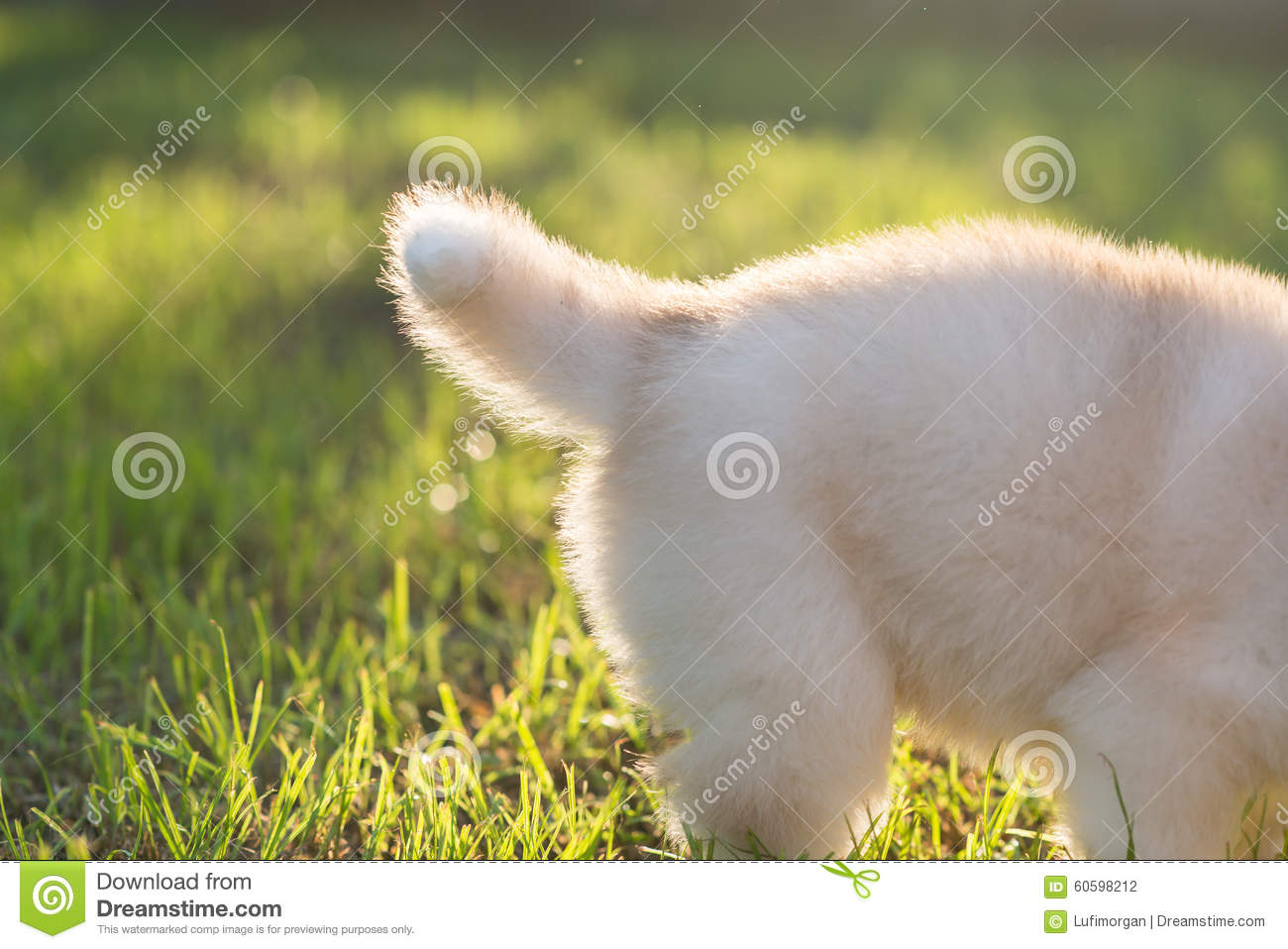 Tail Of Siberian Husky Puppy Stock Photo Image Of Breed Brown