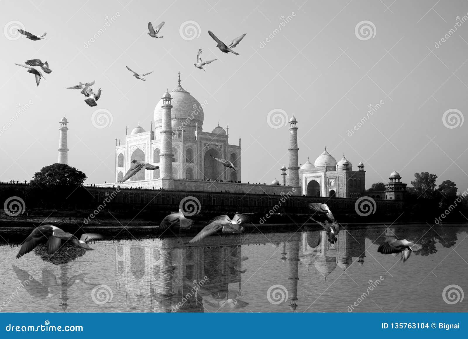 Taj Mahal s est reflété dans la vue de rivière de Yamuna avec l oiseau volant à travers
