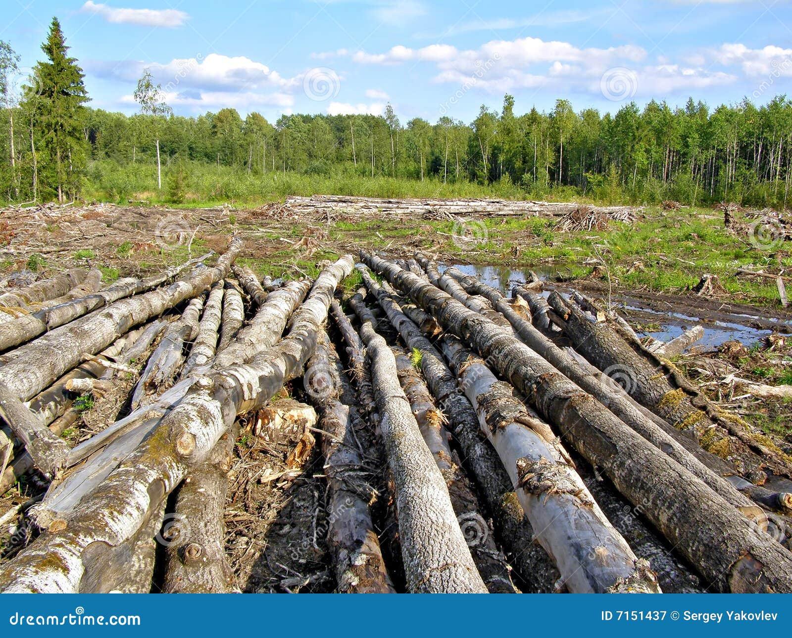 Tajar la madera
