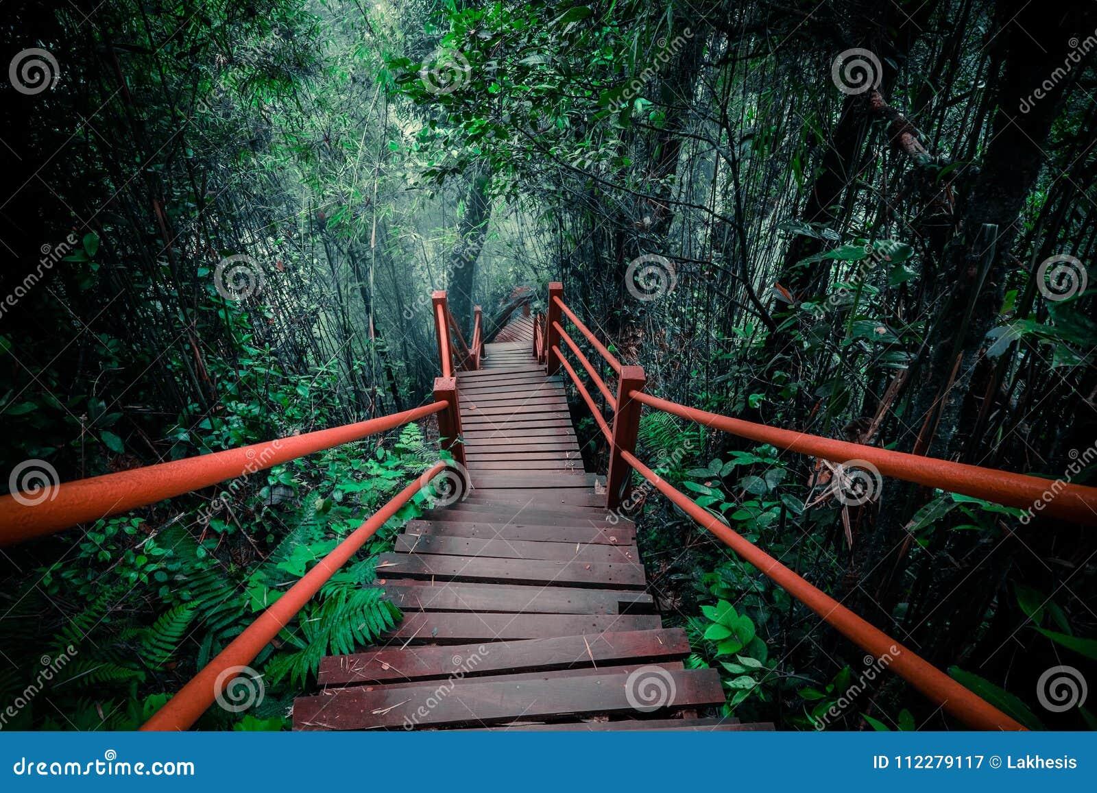Tajemniczy krajobraz mgłowy las z drewnianym mostem