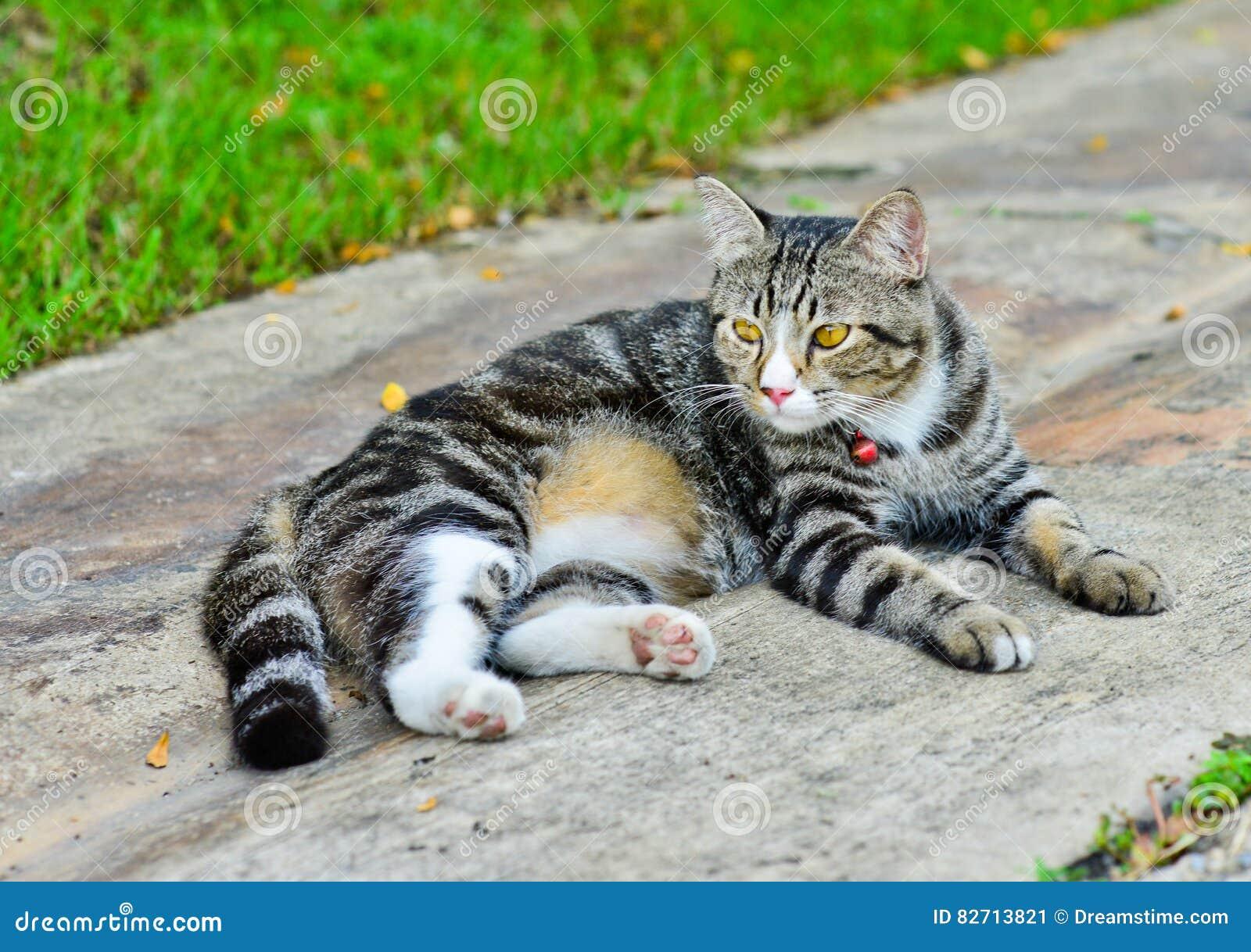 Tajlandia kota hybrydy