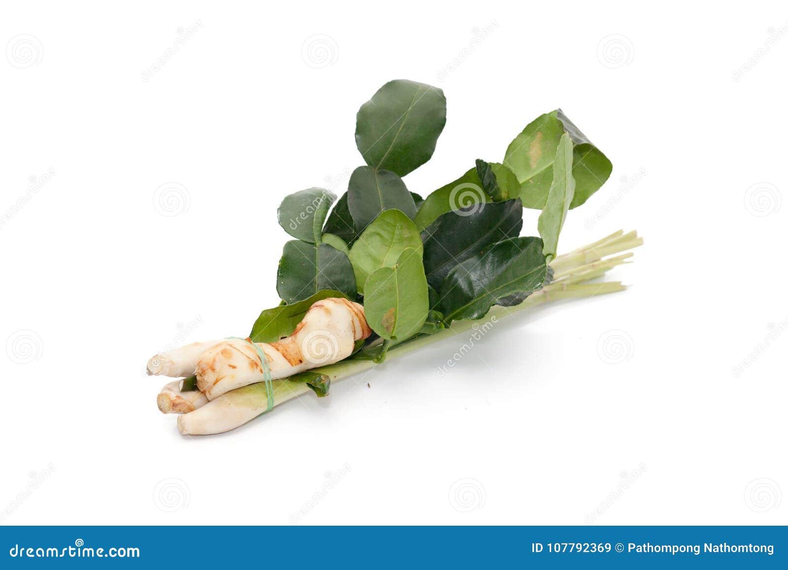 Tajlandzki karmowy składnik dla Tom imbiru yum, galanga, cytryny trawa, KAF