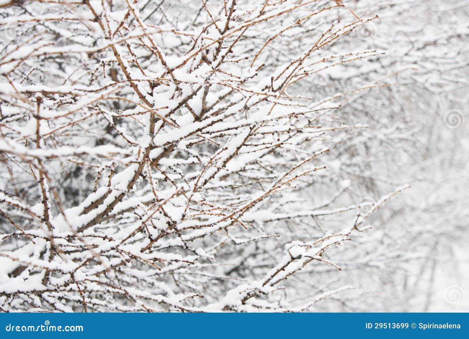 Tak in sneeuw