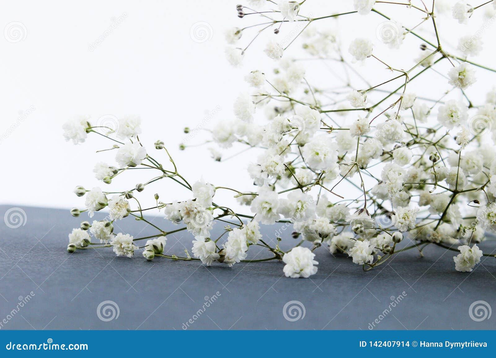 Tak van de lentebloemen op lijst