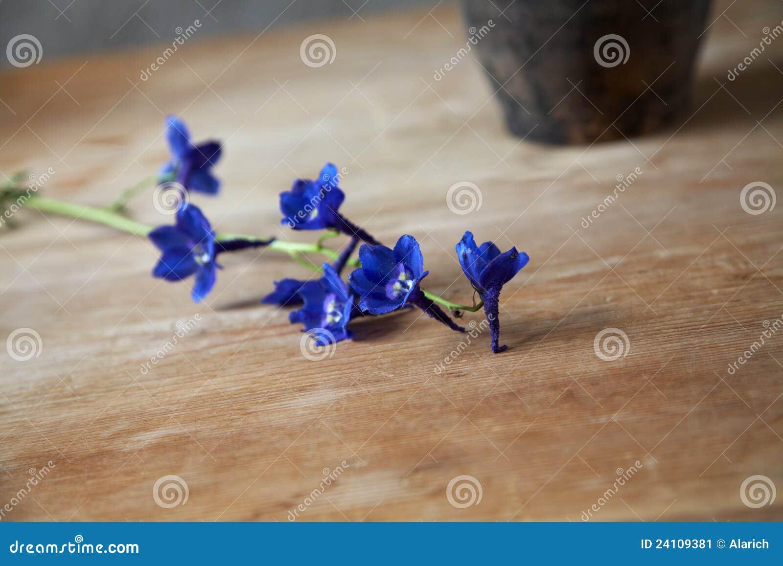 Tak van donkerblauwe bloemen op een houten lijst stock afbeelding ...
