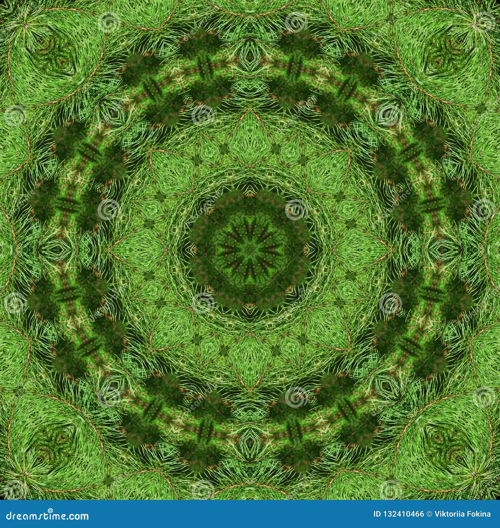 Tak van groene pluizige pijnboom