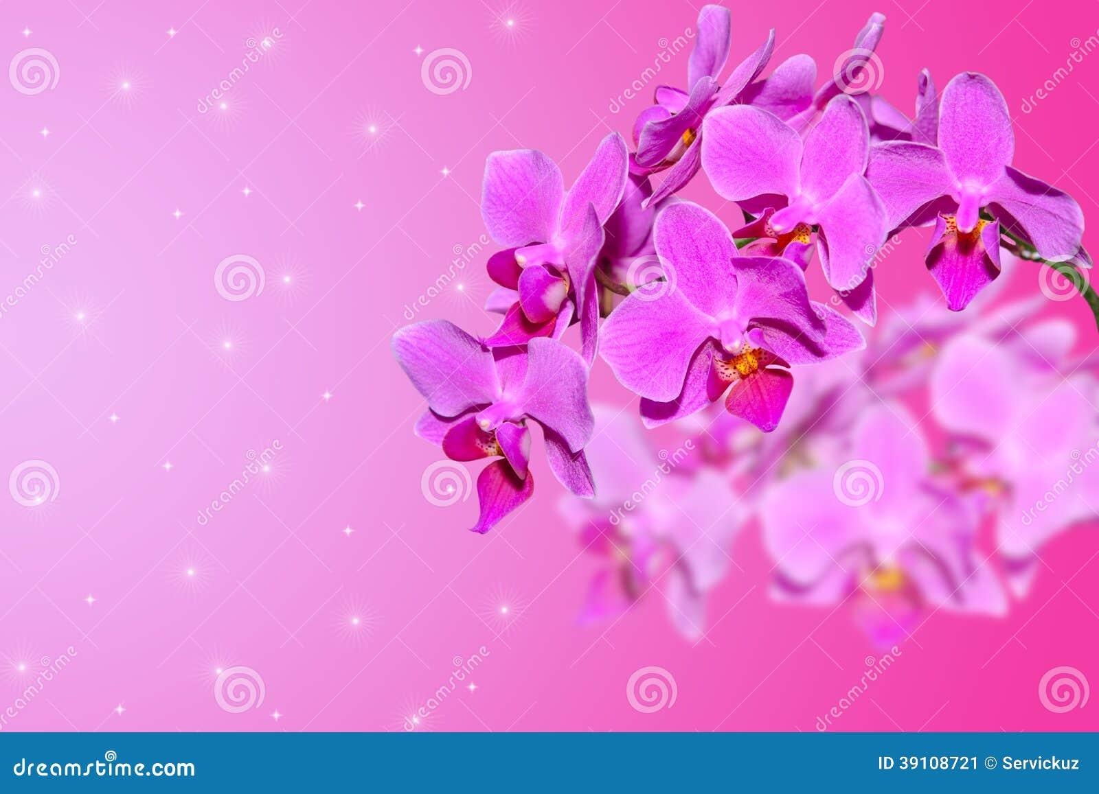 Tak van lilac orchideebloemen op vage gradiënt