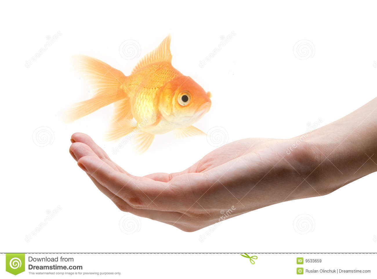 Take Care About Fish Royalty Free Stock Images Image
