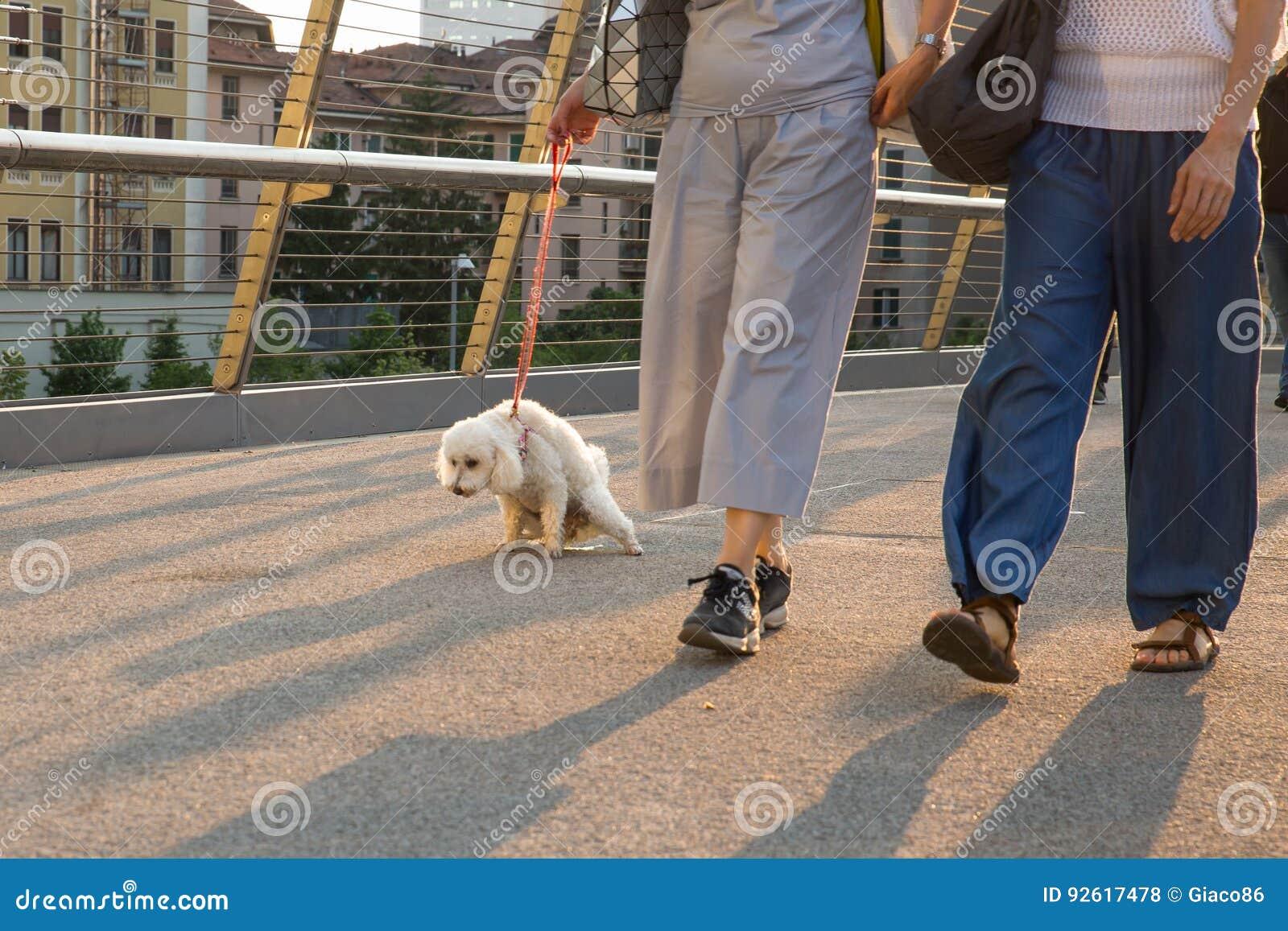 Take the dog to pee - poodle pee on a urban bridge