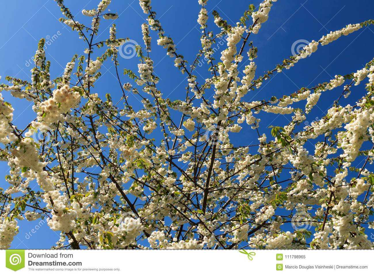 British Spring Flowers Stock Image Image Of Occurring 111798965