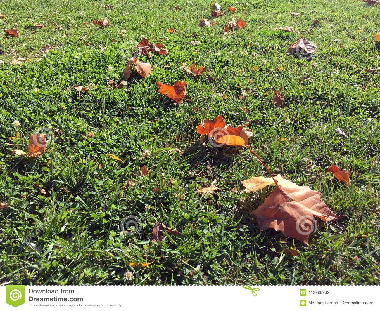 Leafs on the grass in the autumn