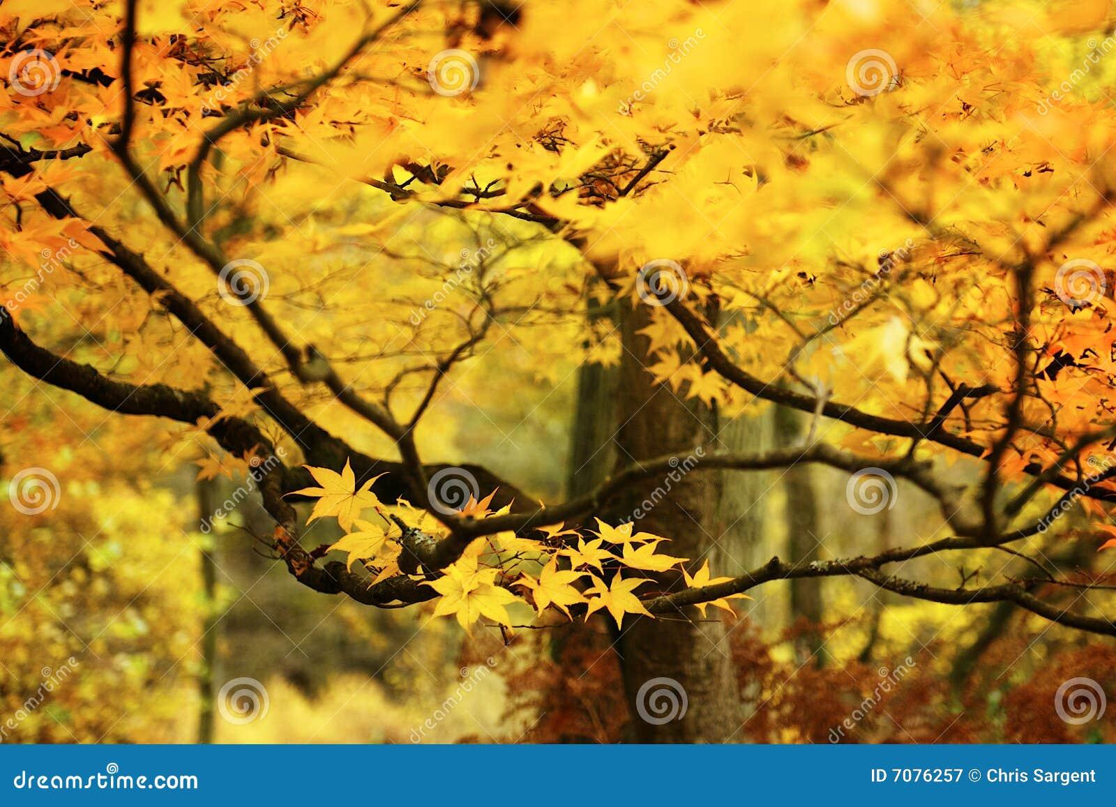 Takken van gouden bladeren