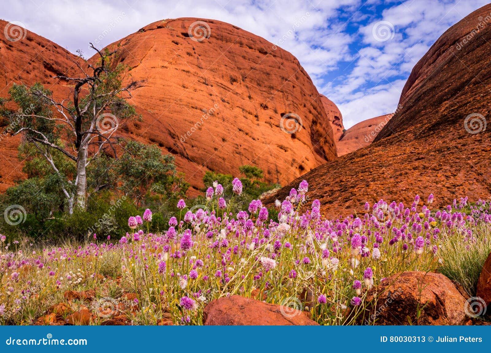 Tal der Winde Wildflowers Uluru Kata Tjuta National Park