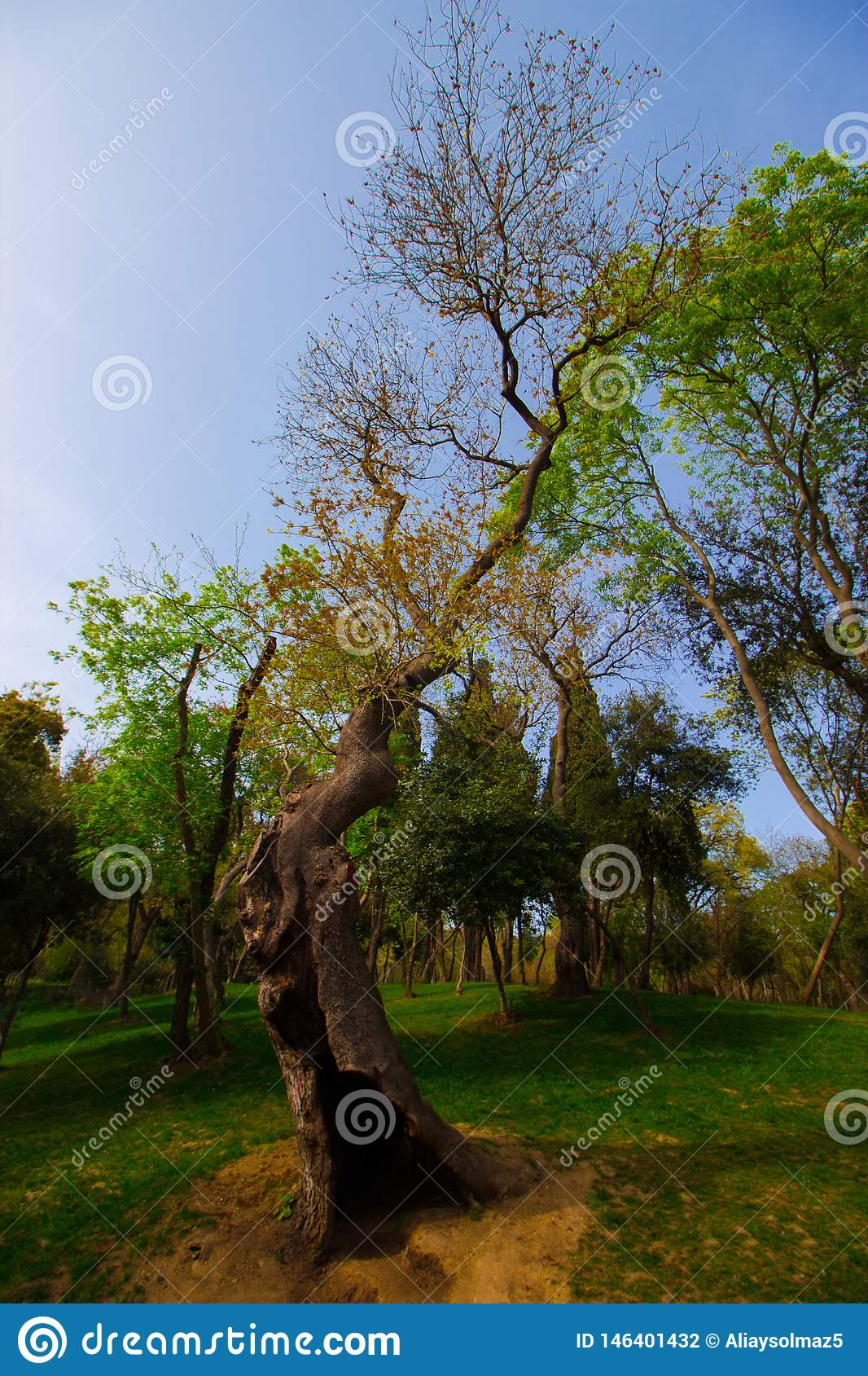 Tale Tree, Charming Tree, Spring Time For Turkey, Grassy Field