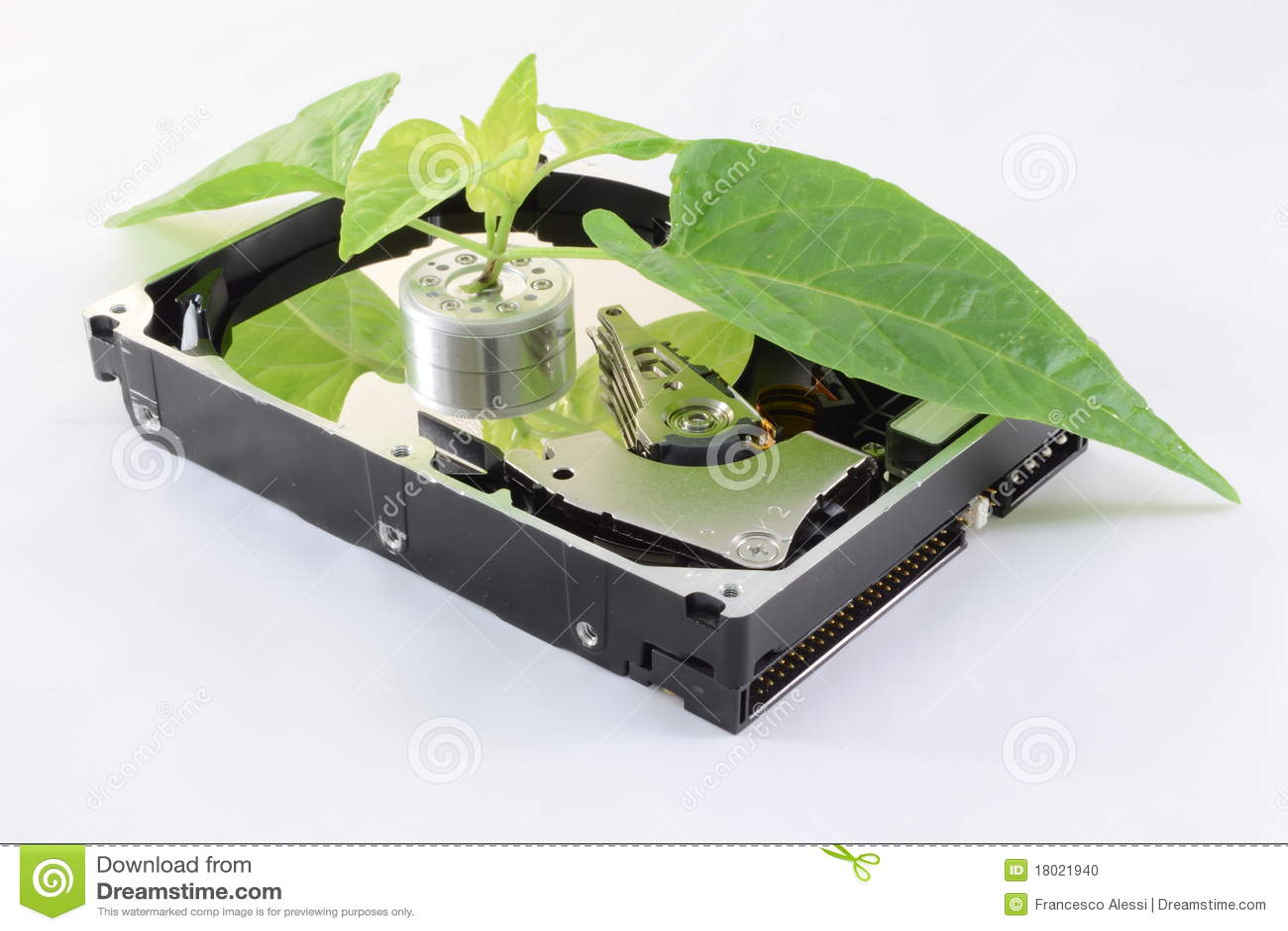 Talerzowy ekologiczny hard