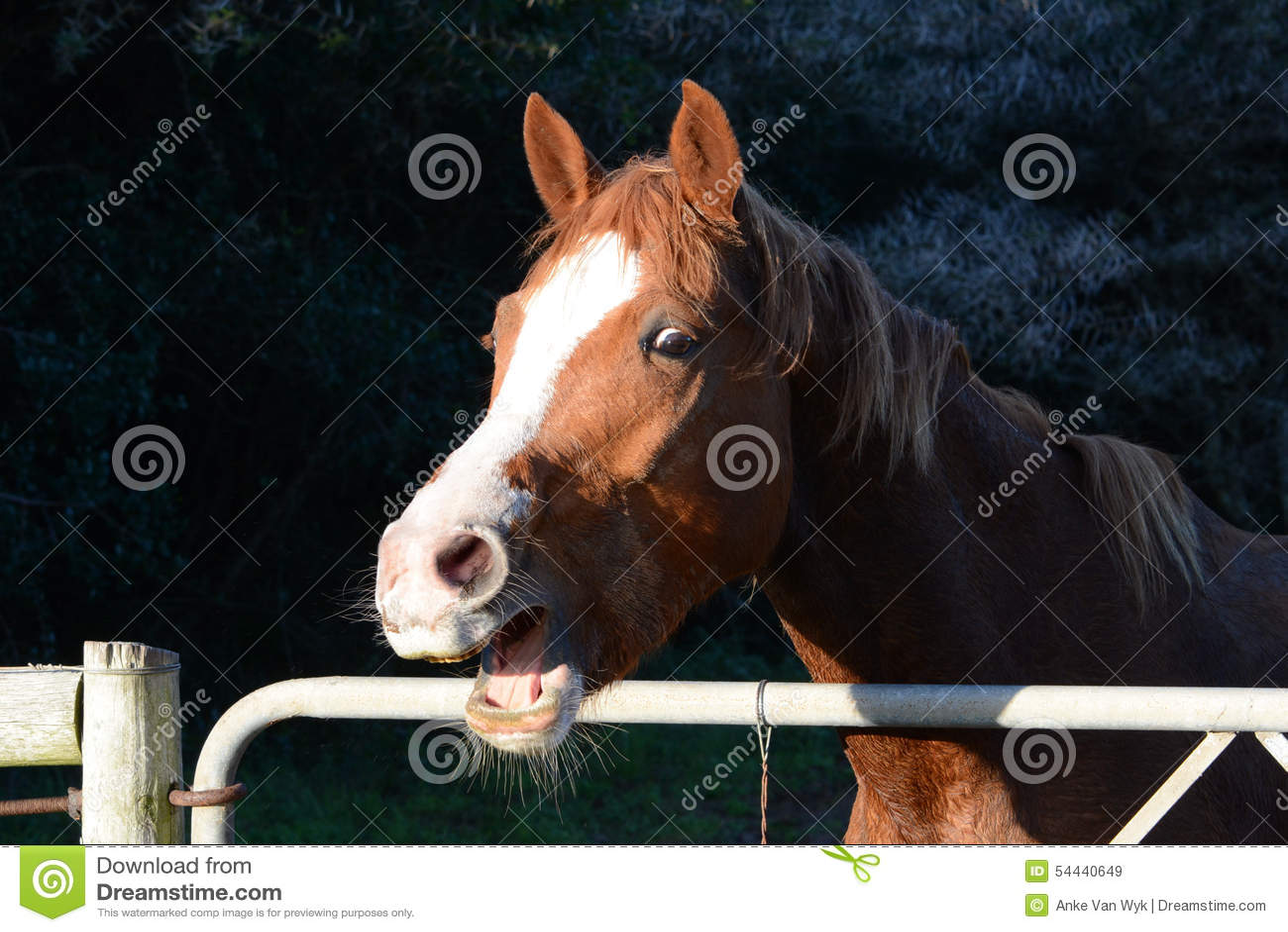 Talking farm horse