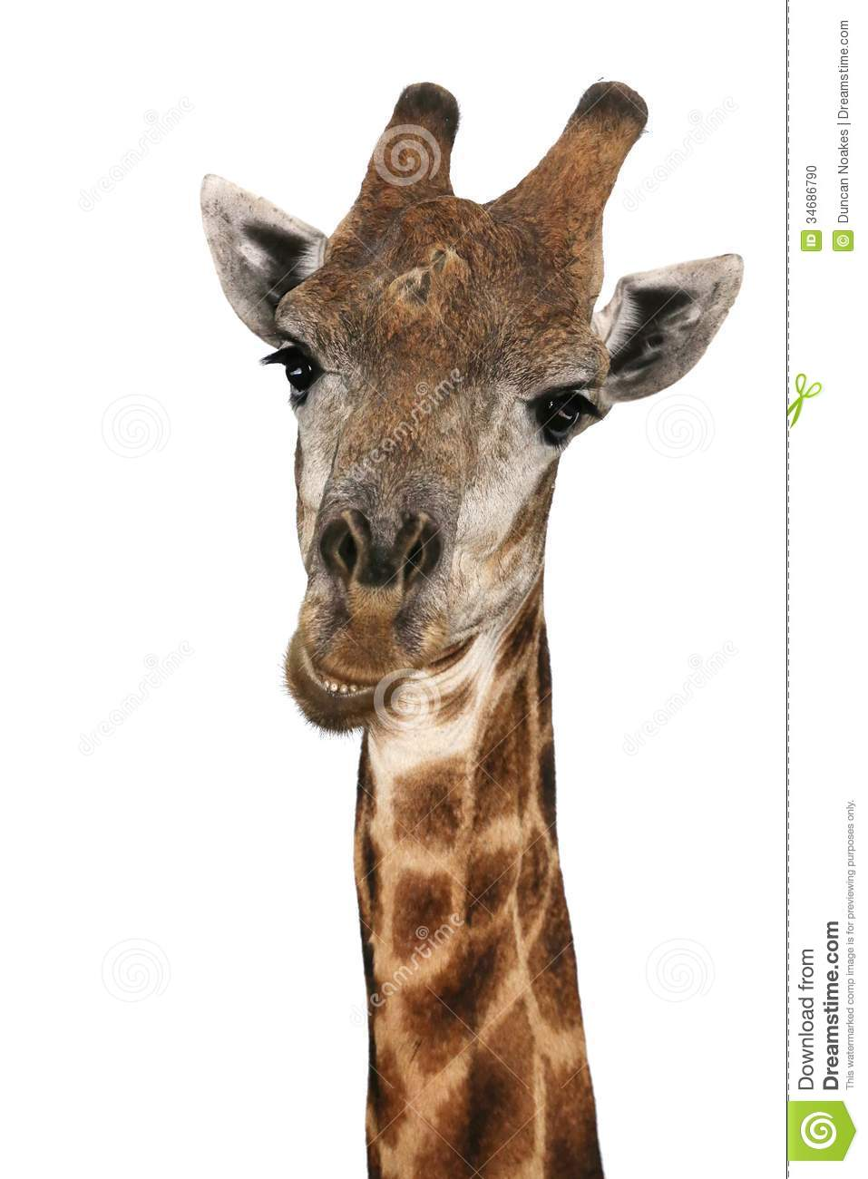 Free Download Talking Gina the Giraffe APK for Android