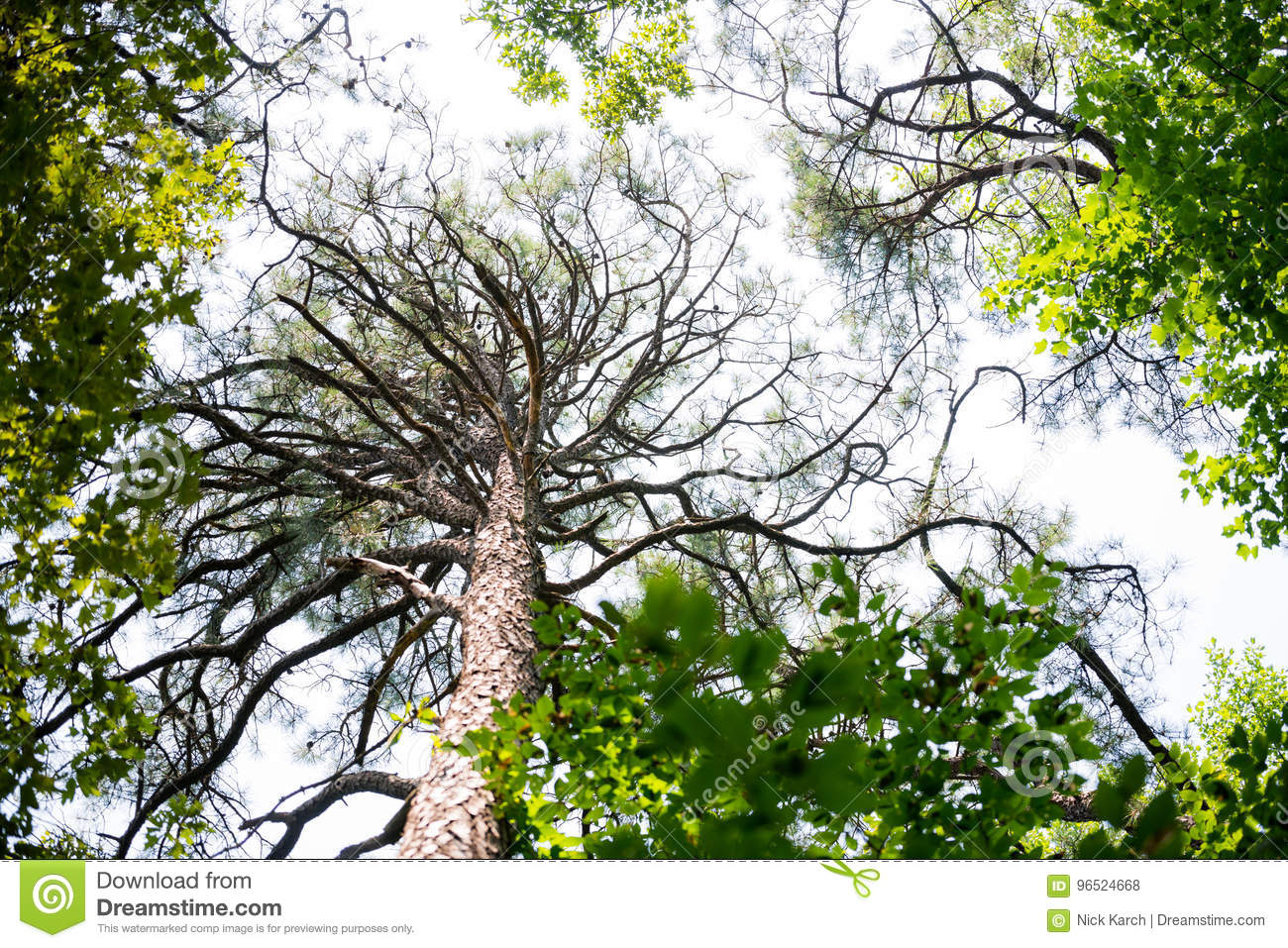 Tall branching tree