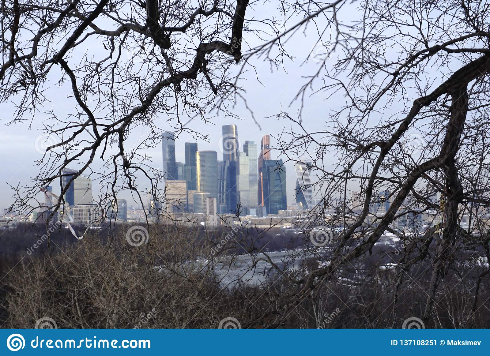 Tall buildings in the background in the branches of trees