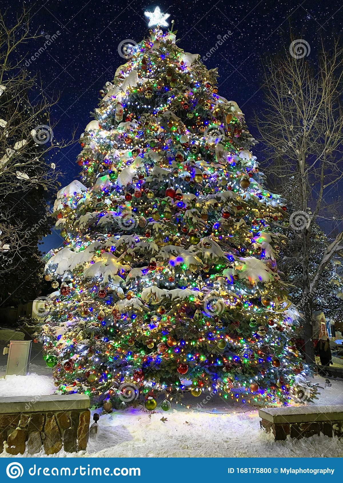 Tall Christmas Tree In Big Bear. Stock Photo - Image of ...