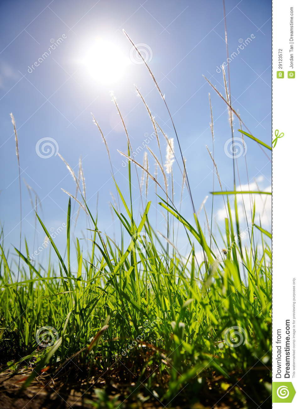 Tall grass against the sun stock photography image 29123572 for Tall grasses for sun