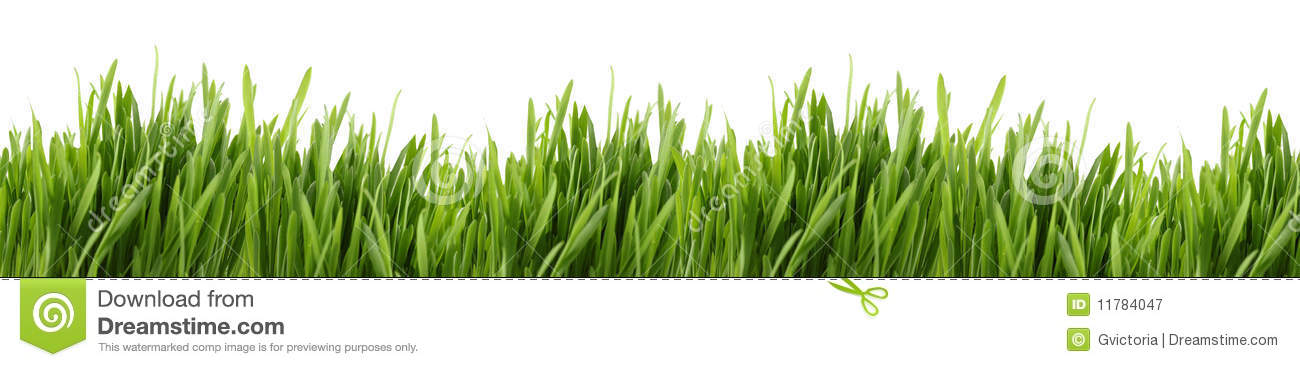 Tall grass banner royalty free stock photography image for Tall border grass