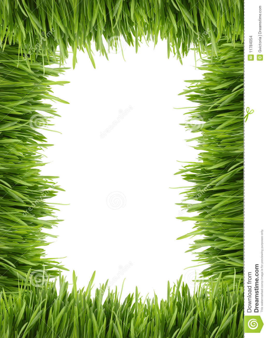 tall grass border or frame stock images image 11784054