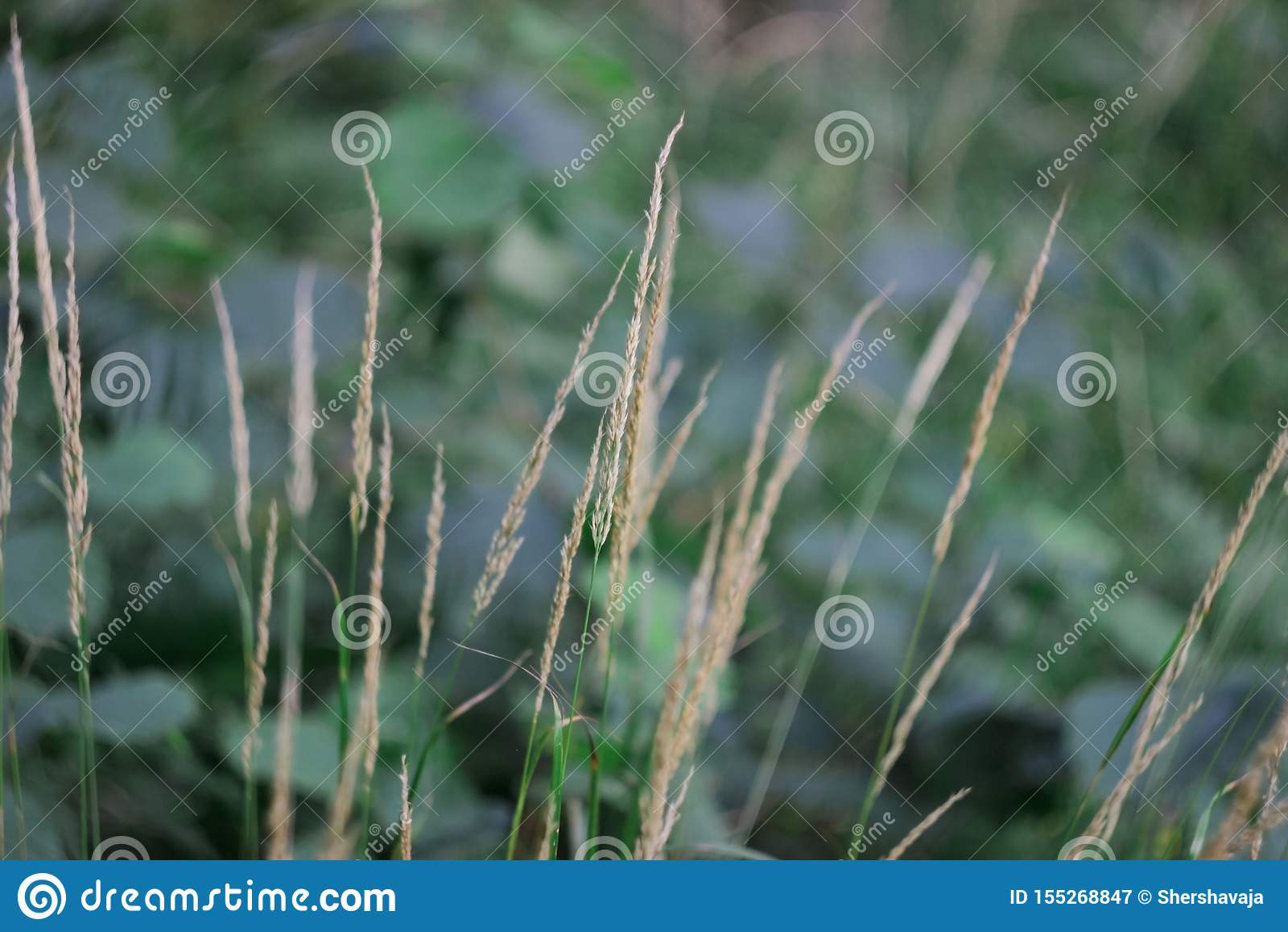 Tall grass in a dark forest.