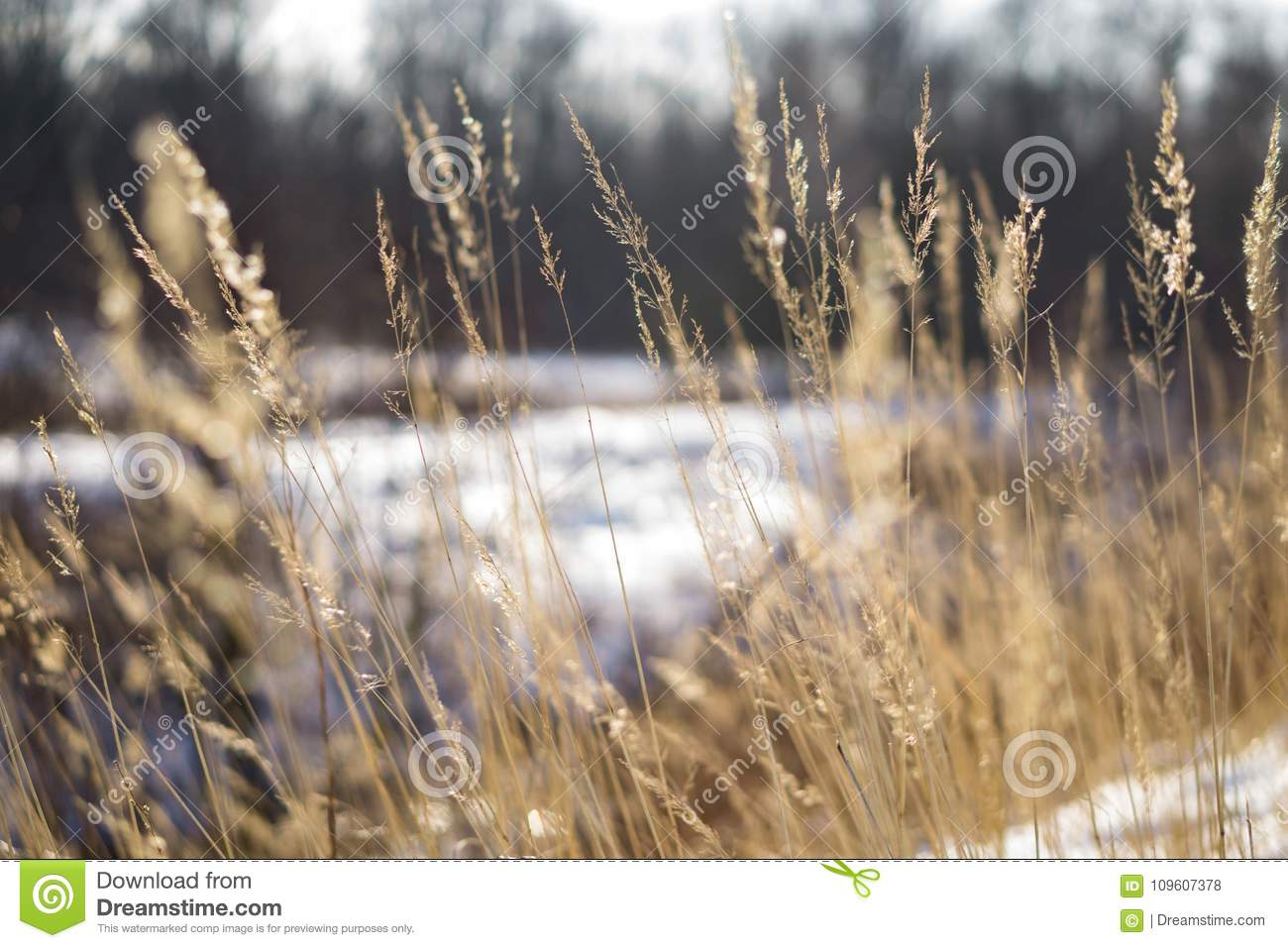 tall grass field path tall grass on field stock photo image of sunny comming 109607378