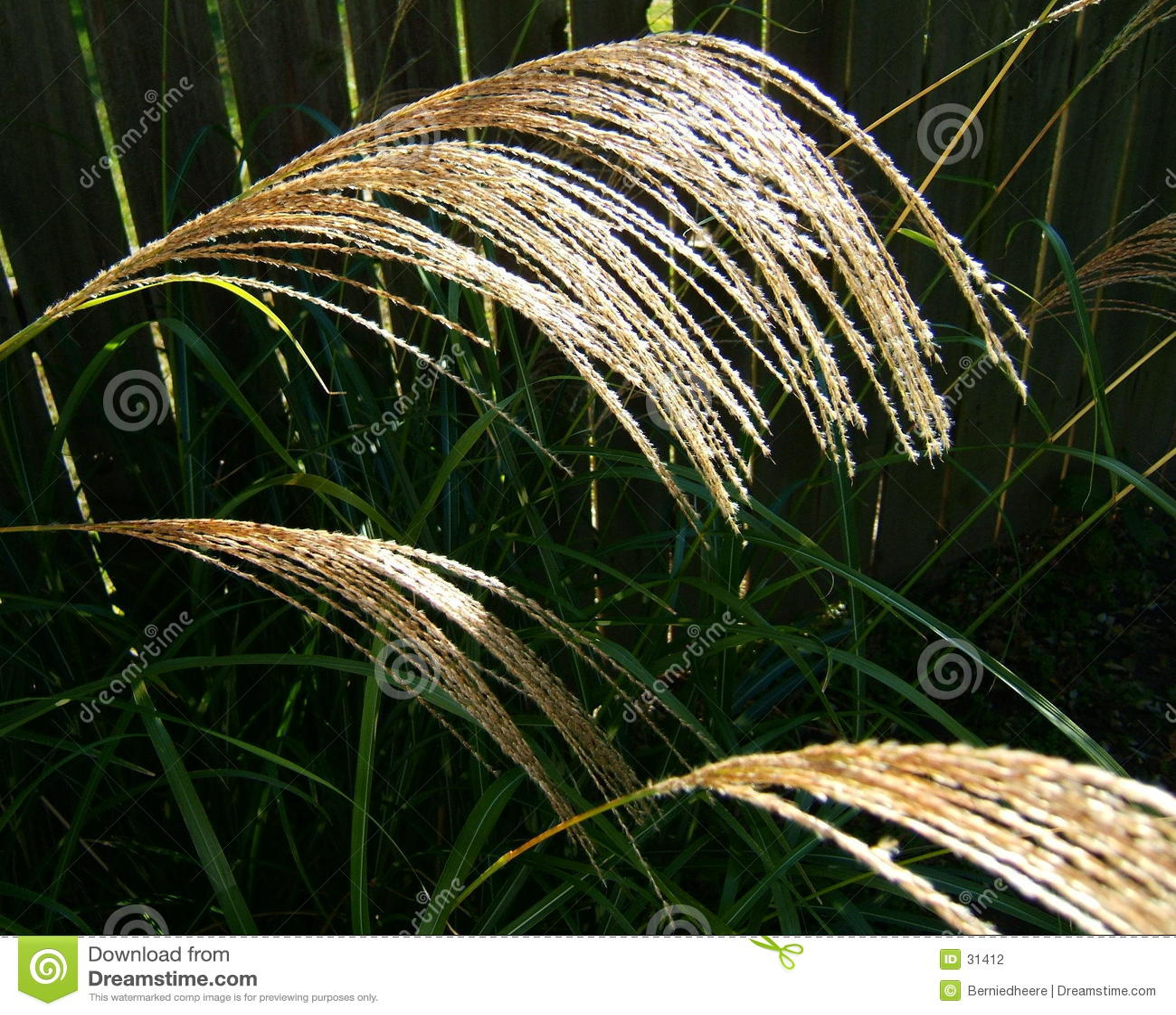 Tall Grass Seed Heads