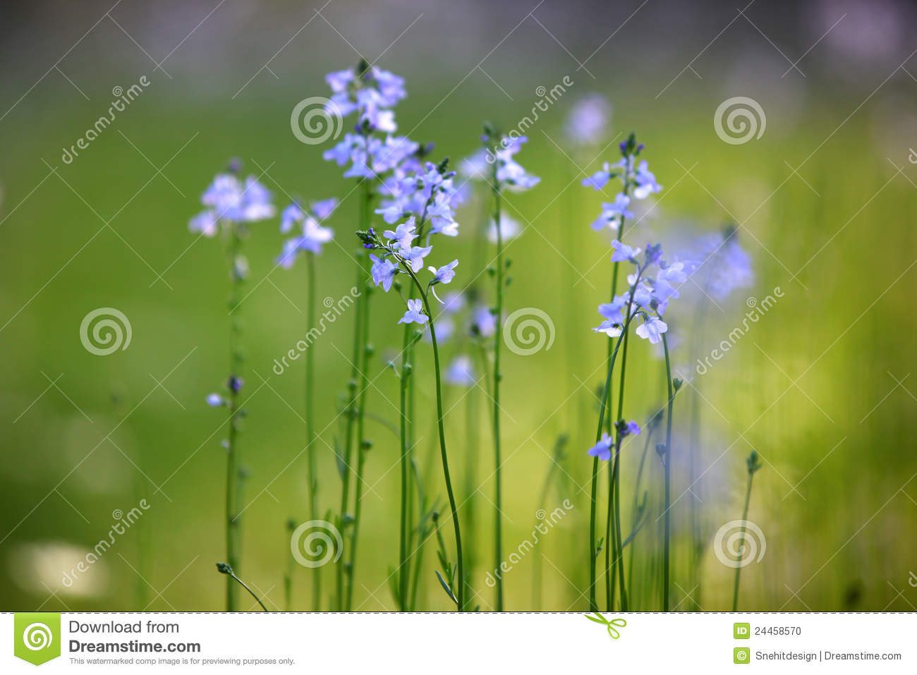 Tall Grass With Tiny Purple Flowers Stock Photo Image Of Blue