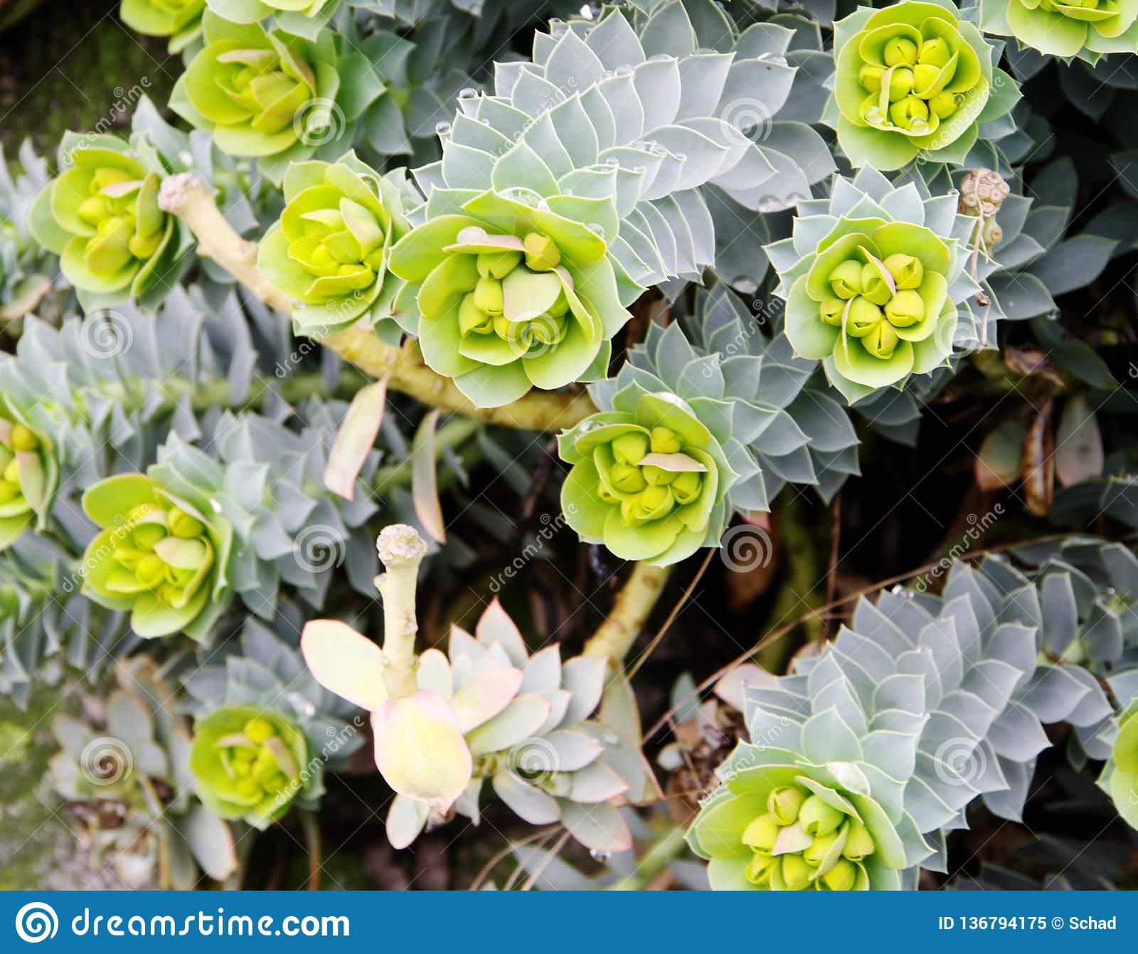 Tall Growing Succulents In Winter Stock Image Image Of Succulents Tallgrowing 136794175
