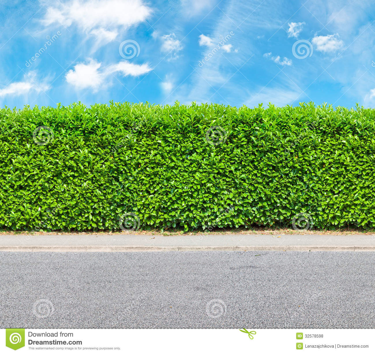 Tall Hedge With The Part Of The Gravel Road Royalty Free