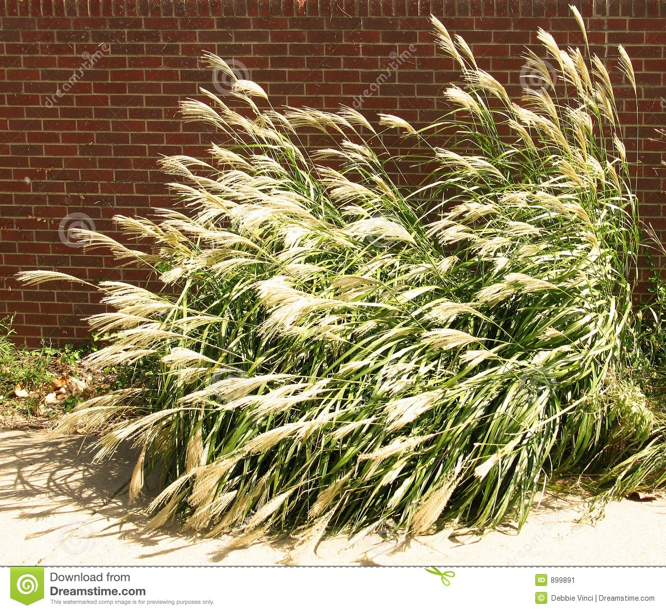 Tall nebraska grass stock image image 899891 for Tall border grass