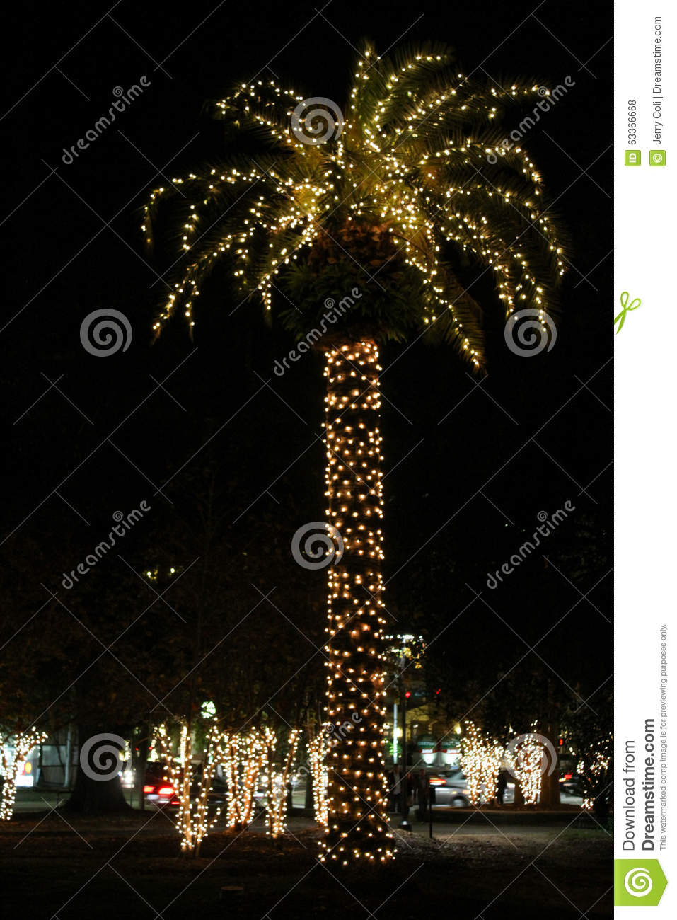 tall palm tree with christmas lights in charleston south carolina