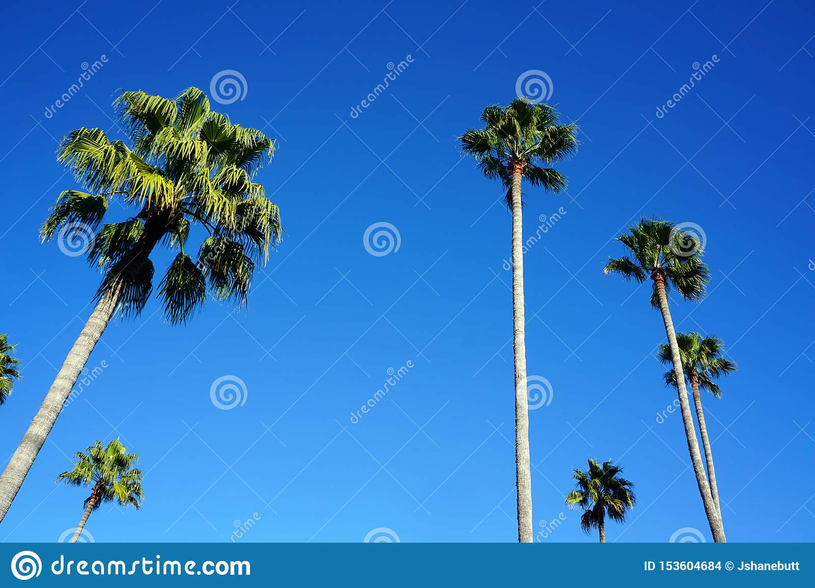 Tall Palm tree looking up