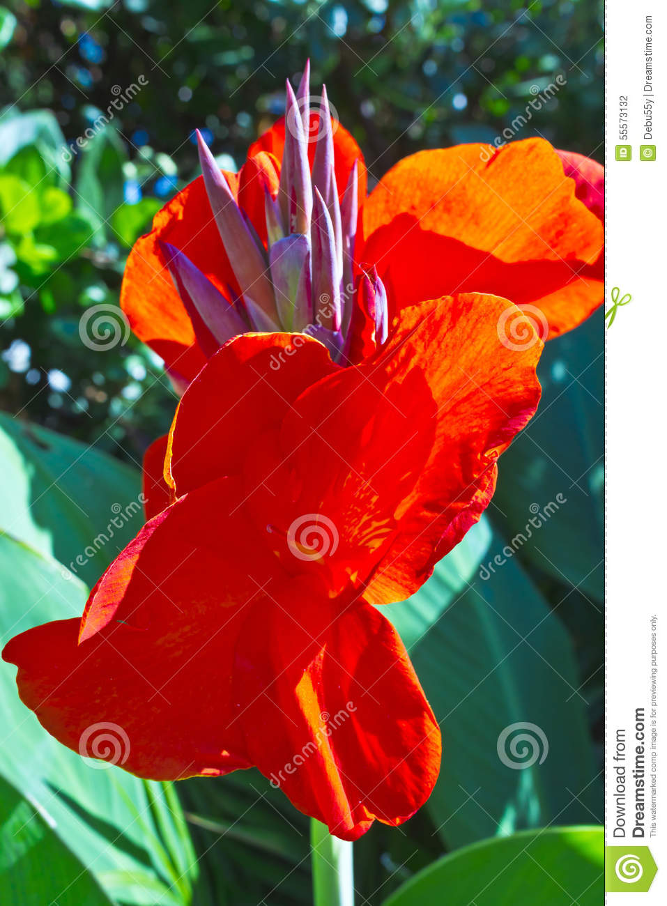 tall red tropical flowers. stock photo  image, Beautiful flower