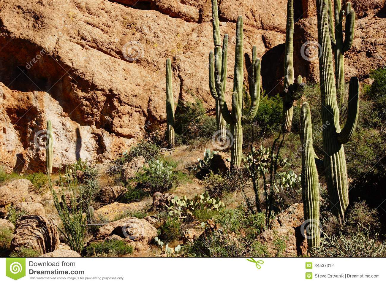 Tall Saguaro Cactus In The Desert Highlands Stock Photo Image Of