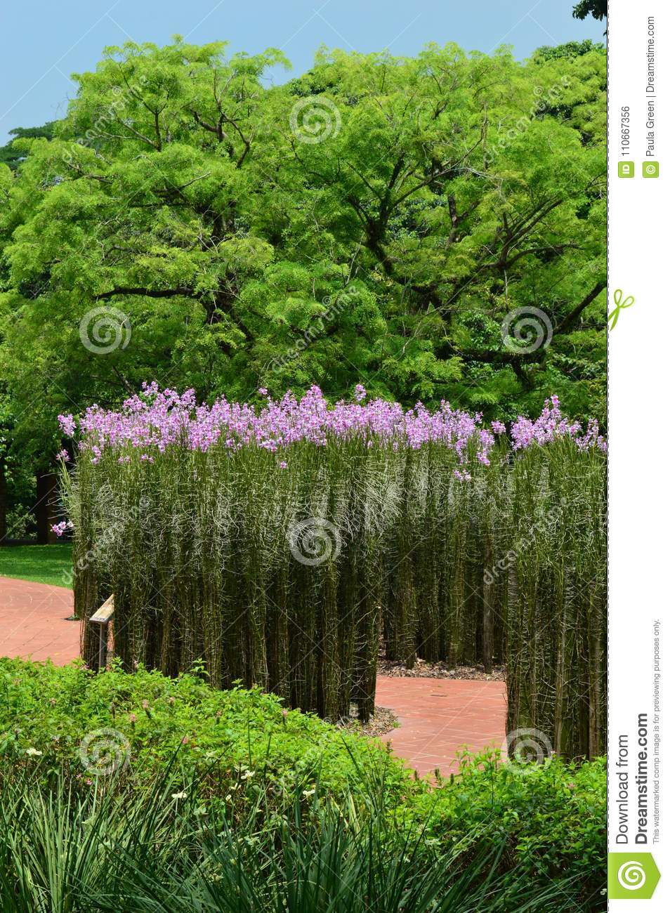 Tall Straight Plants With Purple Flowers At Singapore Botanical
