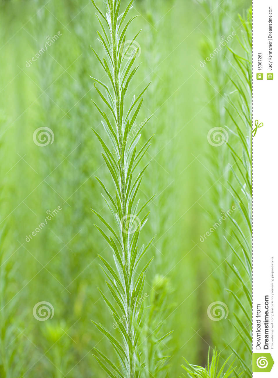 Tall Weeds In With Soft Focus Background Stock Image