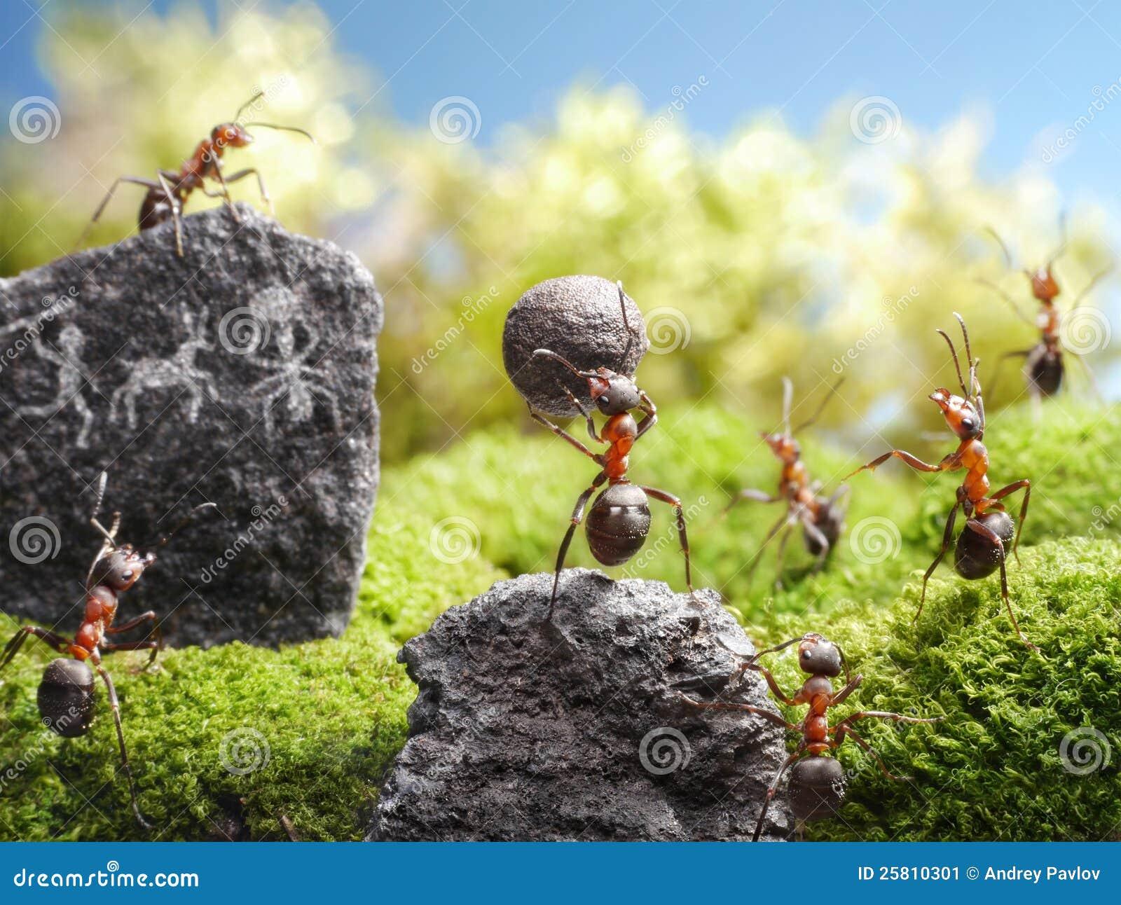 Tallas de la roca, cuentos de la hormiga
