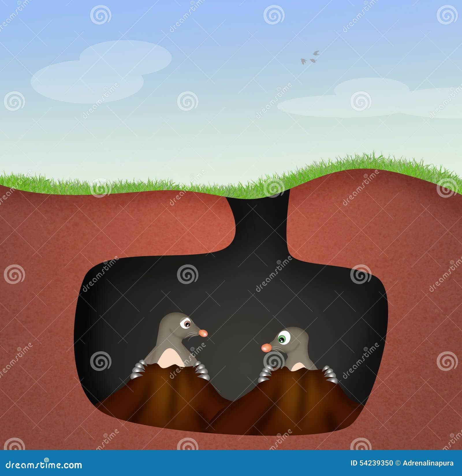 Talpe nella tana illustrazione di stock immagine di talpa for Talpa mammifero