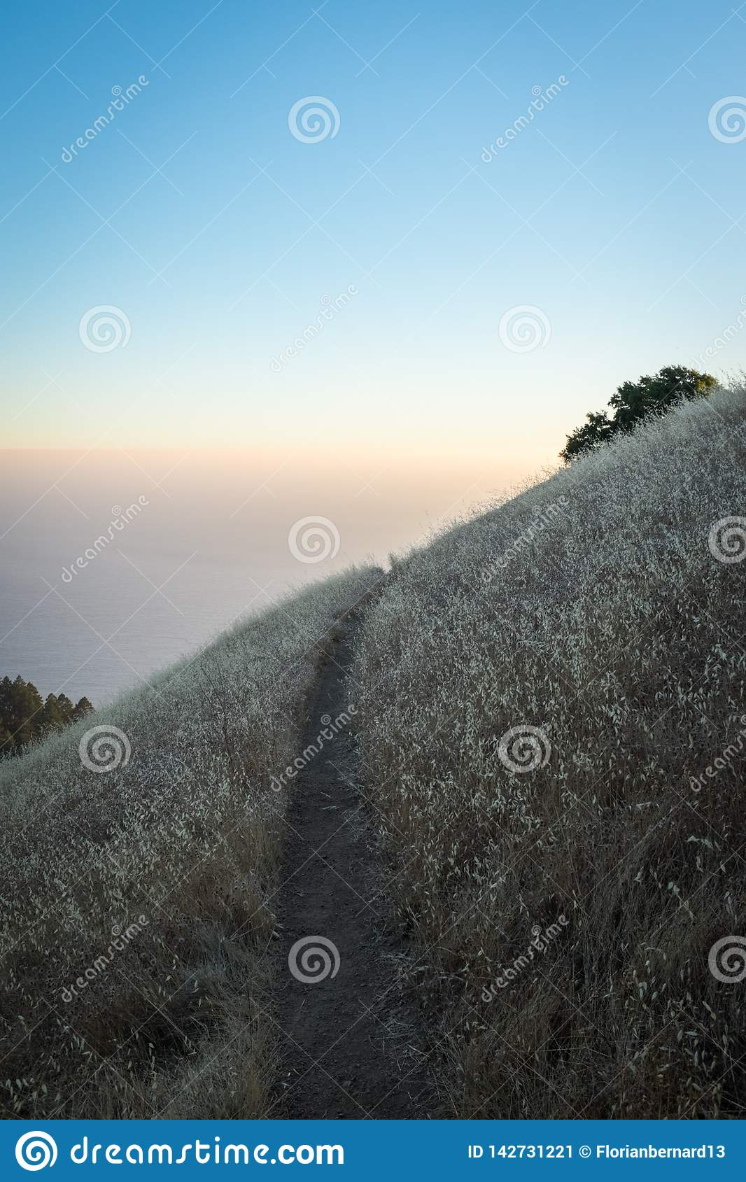 Tamalpais mountain