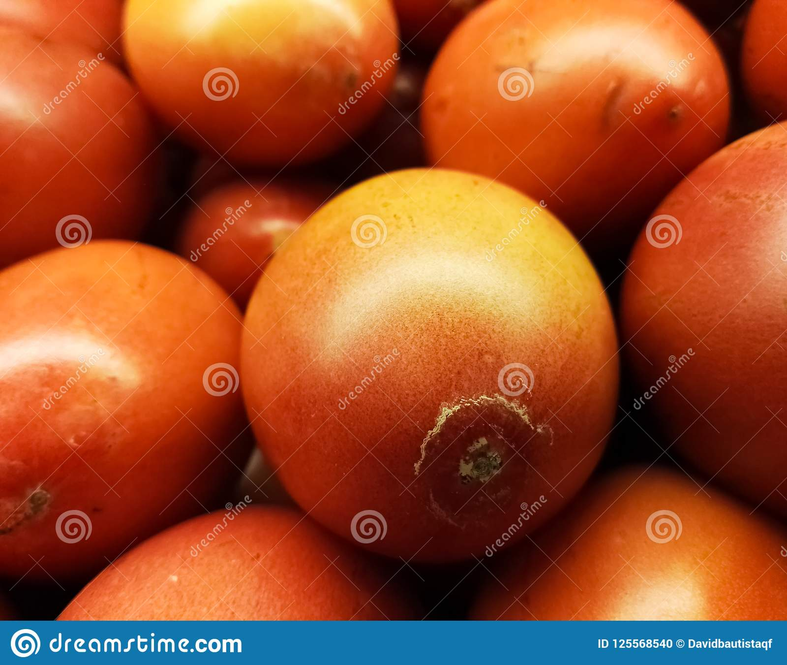 Tamarillo ou tomate de árvore, fruto exótico tropical comestível, popular em Ámérica do Sul