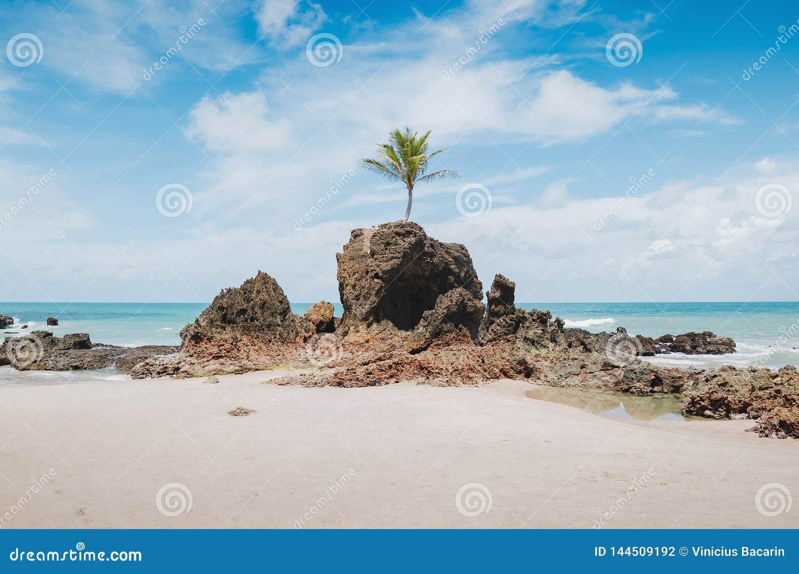 Tambaba Beach, Conde PB Brazil Stock Image - Image of john