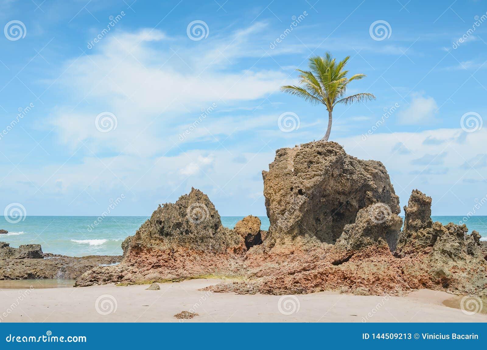 Praia De Tambaba, Conde PB Brazil Stock Photo - Image of
