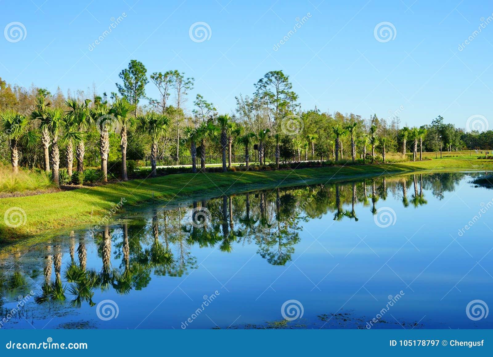 Tampa palm społeczność
