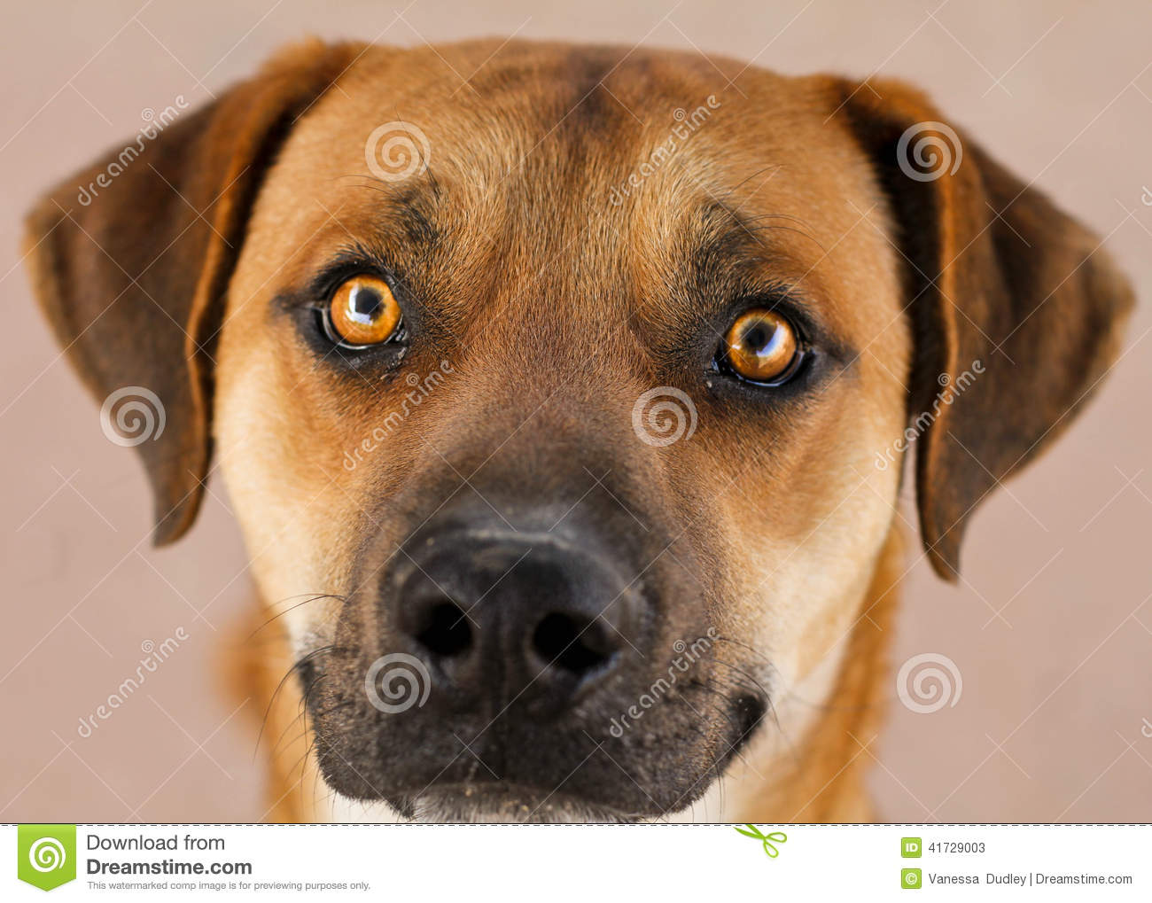Tan Dogs With Black Faces