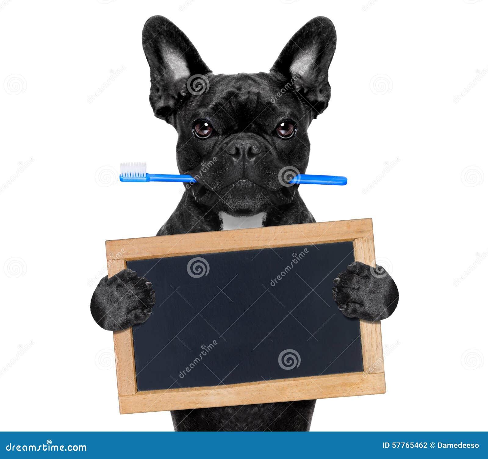Tandtandenborstelhond